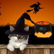 Aguardo con impaciencia por estar cerca de ti este Halloween!