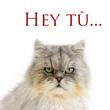 Hey tú... ¡No me gustas!